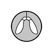 Logo Disamare